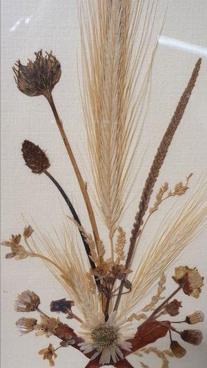 Houten Lijstje Met Gedroogde Bloemen